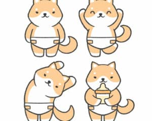 What Health Problems Do Shiba Inus Have 2