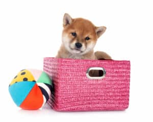Your Comprehensive Guide to Feeding a Shiba Inu Puppy 2